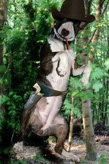 Hund als Cowboy