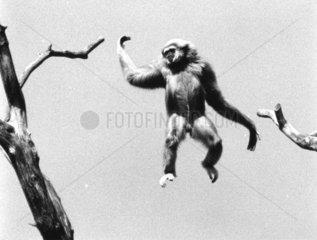 Affe fliegt durch die Luft
