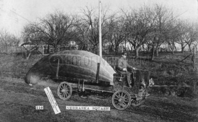 Riesengurke auf der Ladeflaeche eines sehr alten Lastwagens