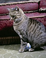 Katze mit Wellensittig