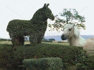Pferd aus Hecke geschnitten