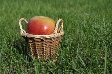 Apfel in einem Koerbchen