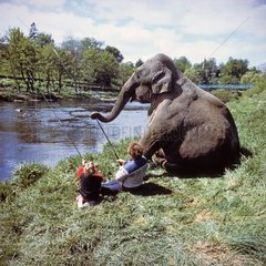 Elefant am Fluss
