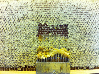 Entdecklung eine Honigwabe