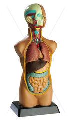 Anatomiemodell  um 1975