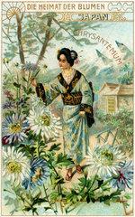 Chrysantemen  historisches Sammelbild  um 1910