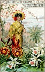 Orchideen  historisches Sammelbild  um 1910
