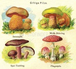 Giftige Pilze  1903