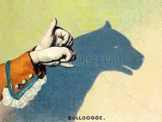 Schattenspiel Bulldogge 1889
