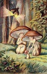 Pilze im Maerchen 1888