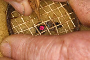 Markierung eine Bienenkoenigin