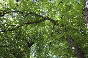 Lush tree foliage  full frame