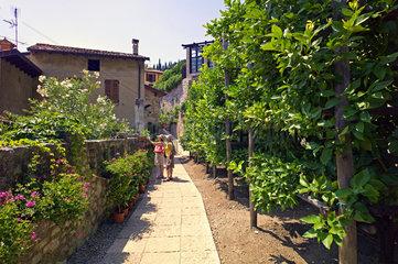 Zitrusplantage