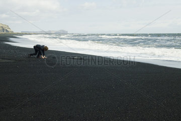 Boy picking up the black sand beach  Iceland