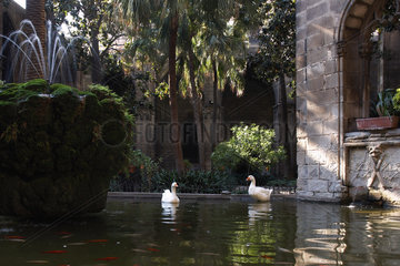 Barcelona (Spain) - Geese in the Cathedral of Santa Eulalia