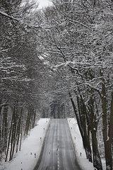 Allee Landstrasse in Nordhessen an der B252