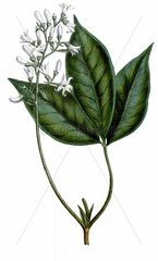 The flora homoeopathica : London :Leath & Ross 1852-1853. http://biodiv