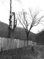 Auto auf Baum
