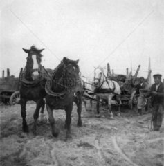 Berlin Pferdekutschen  ca. 1900