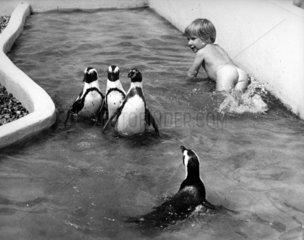 3 kleine Pinguine spielen mit Kind im Wasser
