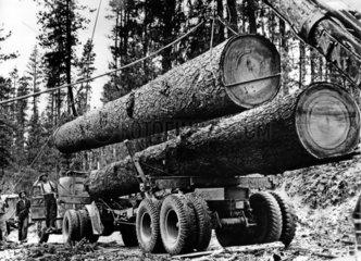 Holzfaeller in den dreissiger Jahren