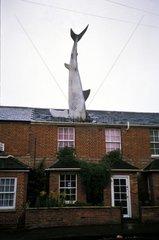 Fisch im Hausdach