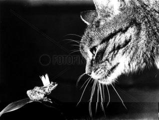 Katze beschnuppert Froschkoenig