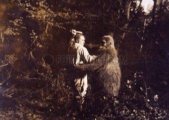 Gorilla kaempft mit Mann