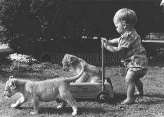 Kleinkind mit Raubkatzenbabys