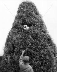 Hund (Terrier) im Baum
