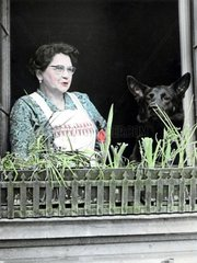 Frau und Schaeferhund am Fenster mit Blumenkasten