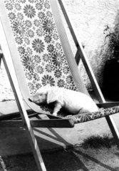 Schwein auf Liegestuhl