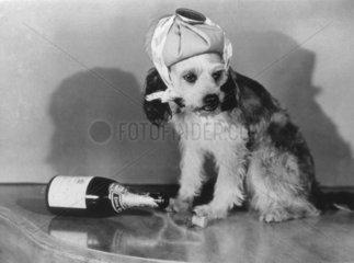 Hund krank mit leerer Sekt-Flasche