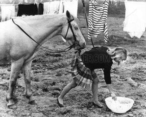 Frivoles Pferd