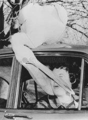 Pelikan greift Frau im Auto an