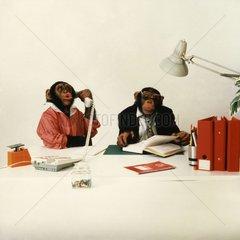 2 Affen als Manager & Sekretaerin