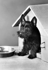 Hund in Hundehuette