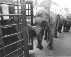 Elefanten vor Telefonzelle