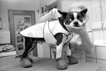 Schoenheit Kosmetik fuer Hund