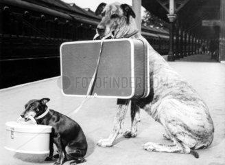 Zwei Hunde auf Reisen Koffer