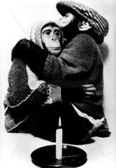 Affenpaerchen umarmt sich