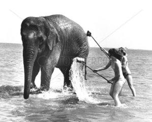 Elefant nimmt Bad im Meer