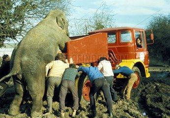 Elefant + Maenner schieben LKW