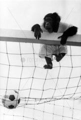 Affe in Fussballtor