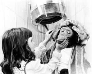Maedchen kaemmt Schimpansen
