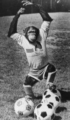 Schimpanse spielt Fussball