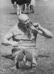 Mann isst Gras auf Kuhweide