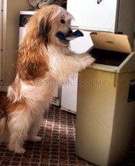 Hund wirft Muell in Eimer