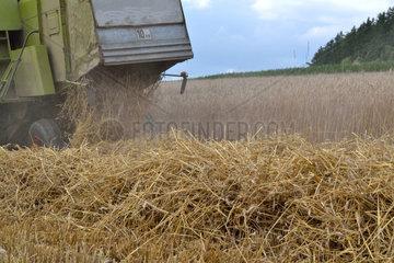 Maehdrescher bei Getreideernte