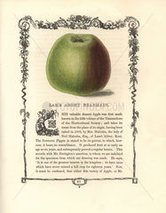Lamb Abbey Pearmain apple  Malus domestica